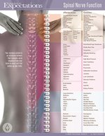 SPINAL NERVE FUNCTION POSTER - NEW